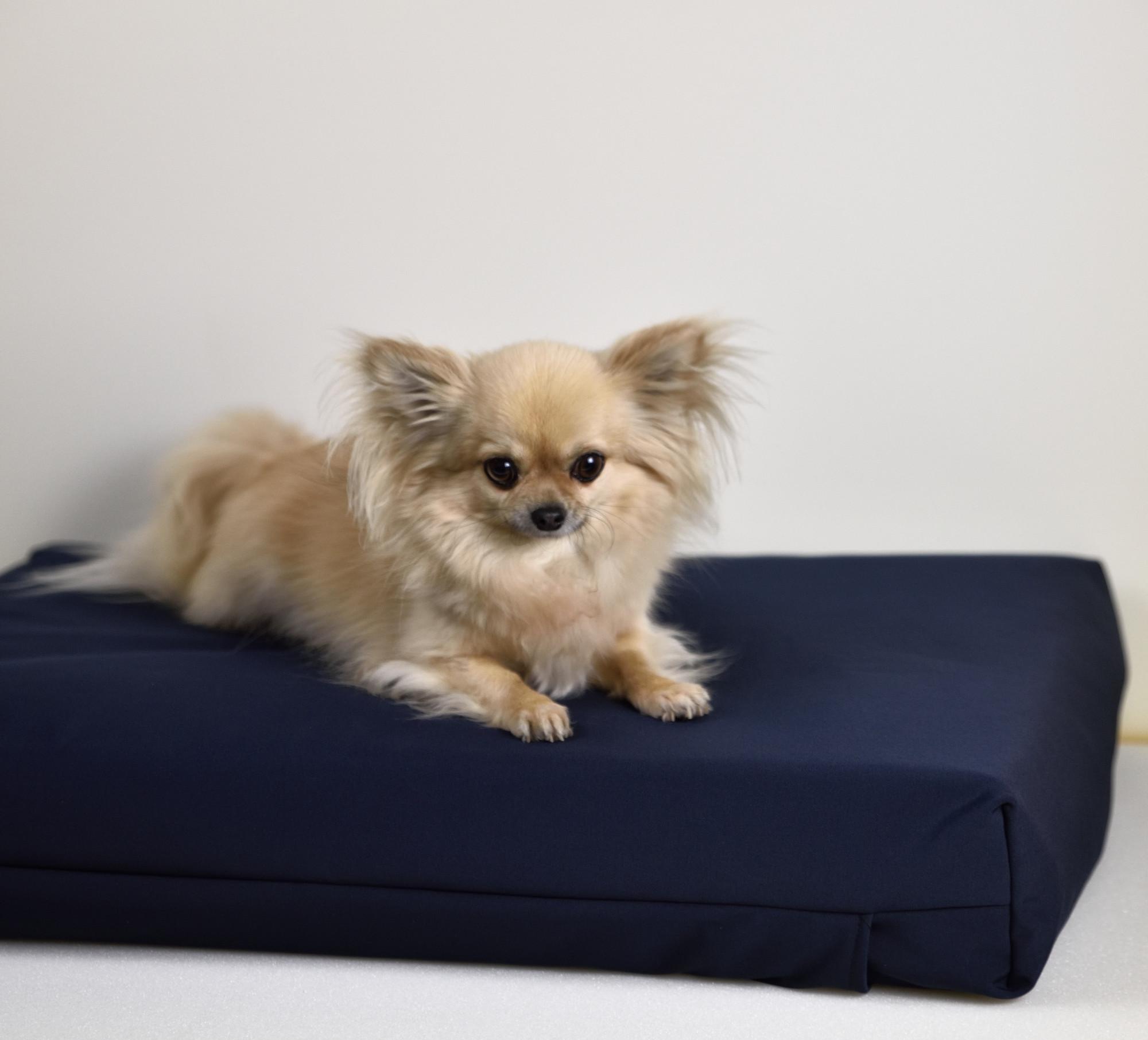 Honden- en Katten kussen 50x70x10 cm